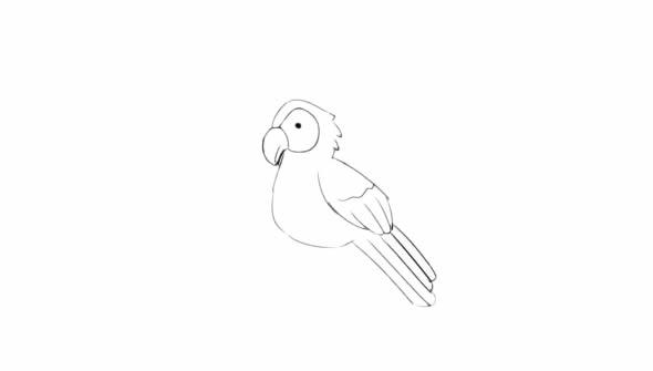 聪明的小鹦鹉简笔画图解教学 动物-第4张