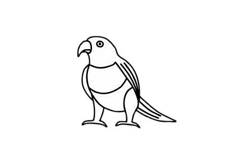 鹦鹉儿童简笔画步骤图片 中级简笔画教程-第1张