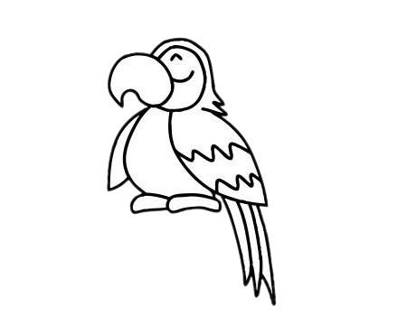 鹦鹉儿童简笔画步骤图片 中级简笔画教程-第8张