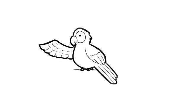 聪明的小鹦鹉简笔画图解教学 动物-第1张