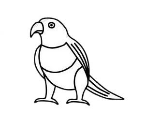 鹦鹉儿童简笔画步骤图片 中级简笔画教程-第2张