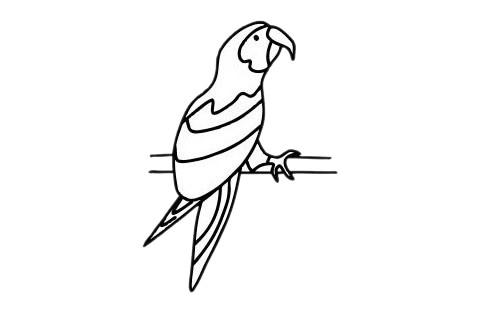 鹦鹉儿童简笔画步骤图片 中级简笔画教程-第9张