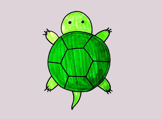 小乌龟怎么画简朴又可爱 乌龟简笔画 中级简笔画教程-第1张