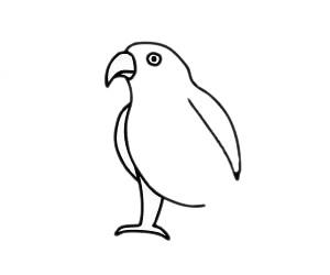 鹦鹉儿童简笔画步骤图片 中级简笔画教程-第6张