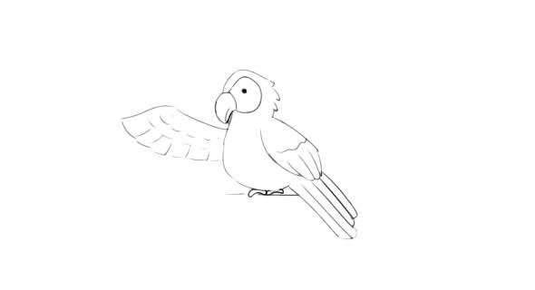 聪明的小鹦鹉简笔画图解教学 动物-第5张