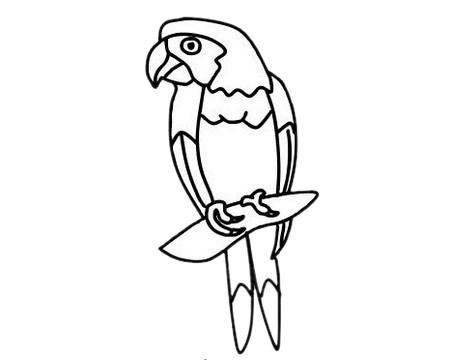 鹦鹉儿童简笔画步骤图片 中级简笔画教程-第10张