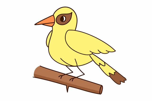 黄鹂鸟简笔画彩色图片 动物-第2张