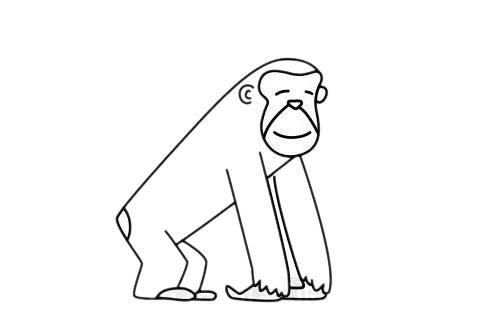 卡通猩猩简笔画绘画教程 中级简笔画教程-第8张