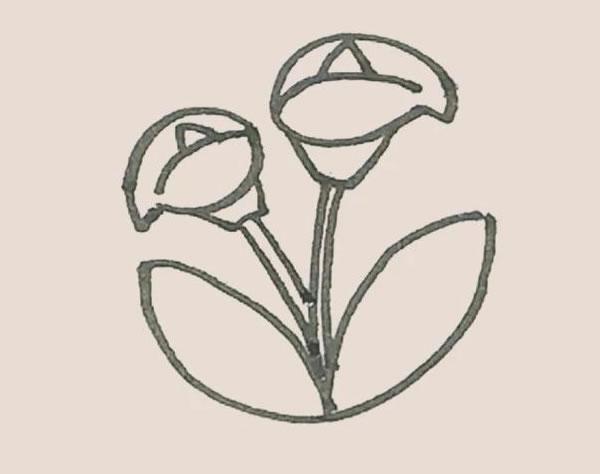 马蹄莲植物简笔画 中级简笔画教程-第6张