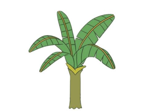 彩色芭蕉树简笔画的画法 初级简笔画教程-第10张