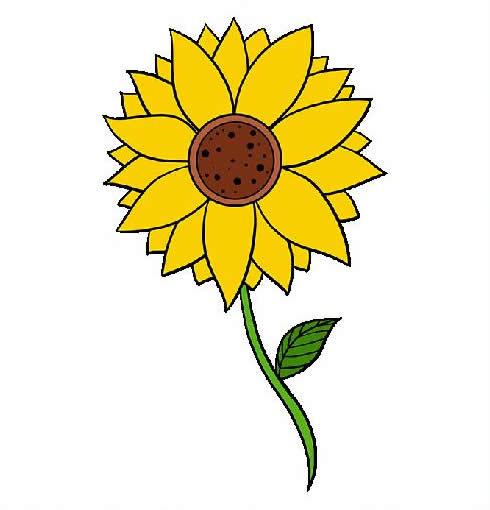 向日葵简笔画步骤图片大全 植物-第1张
