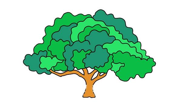 茂盛大树简笔画彩色画法图片 中级简笔画教程-第1张