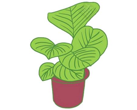 绿色植物儿童简笔画教程 初级简笔画教程-第10张