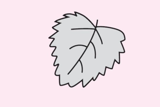 简单易学的树叶画法 初级简笔画教程-第6张
