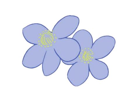 银莲花简笔画的画法,植物简笔画彩色 中级简笔画教程-第6张