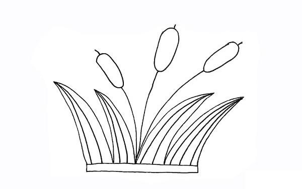 画法步骤芦苇 芦苇简笔画彩色画法步骤教程 植物-第8张