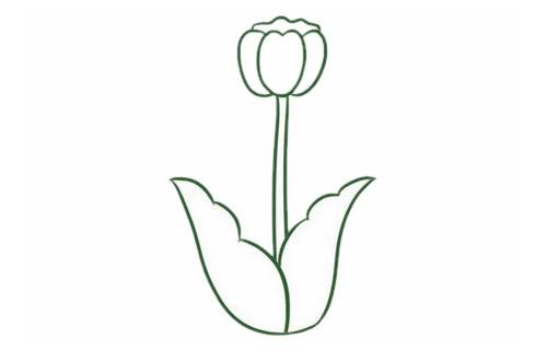 郁金香简笔画,花朵简笔画大全 初级简笔画教程-第4张