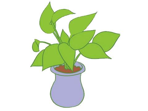 绿萝简笔画画法,绿色植物简笔画 中级简笔画教程-第10张