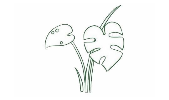 龟背竹简笔画,绿色植物儿童简笔画 初级简笔画教程-第4张