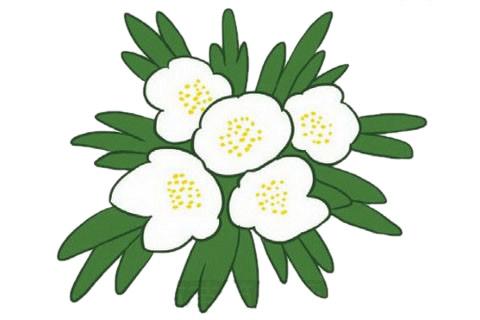 银莲花简笔画的画法,植物简笔画彩色 中级简笔画教程-第1张