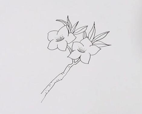 桃花画法步骤,桃花简笔画 中级简笔画教程-第3张
