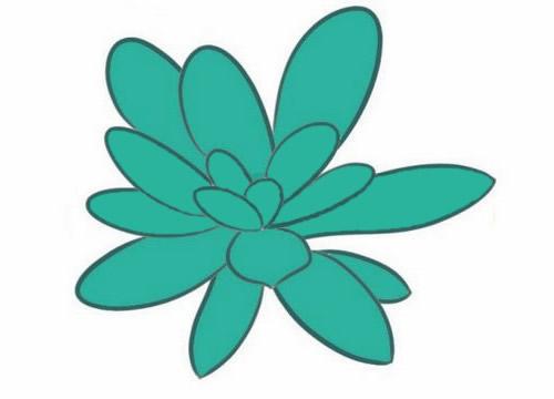多肉植物简笔画分步骤画法 中级简笔画教程-第9张