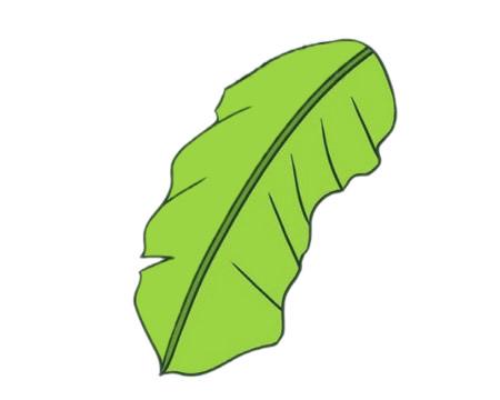 彩色芭蕉树简笔画的画法 初级简笔画教程-第8张