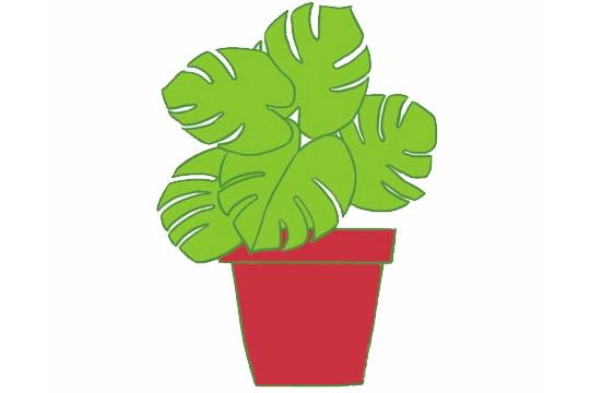 龟背竹简笔画,绿色植物儿童简笔画 初级简笔画教程-第6张