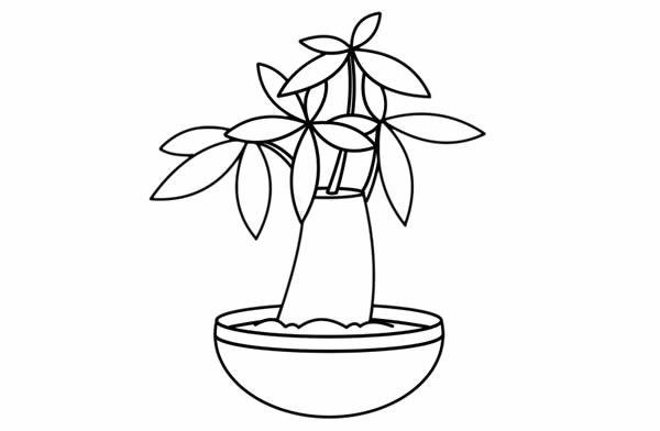 发财树儿童简笔画手绘 中级简笔画教程-第6张