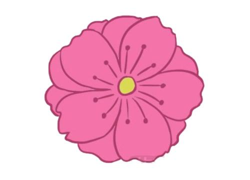 樱花简笔画的画法步骤教程及图片大全 植物-第6张