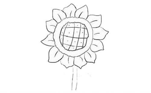 向日葵简笔画步骤图解教程 植物-第6张