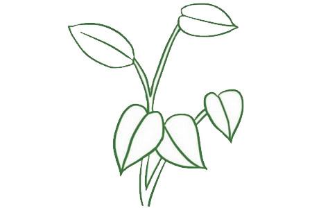 绿萝简笔画画法,绿色植物简笔画 中级简笔画教程-第5张