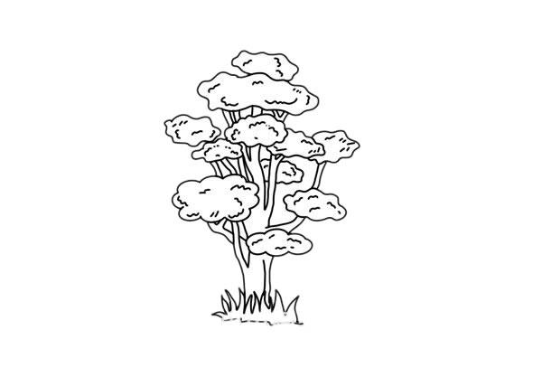 彩色柞树简笔画的画法步骤教程 中级简笔画教程-第7张