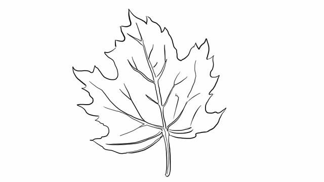 树叶枫叶简笔画图画 植物-第1张