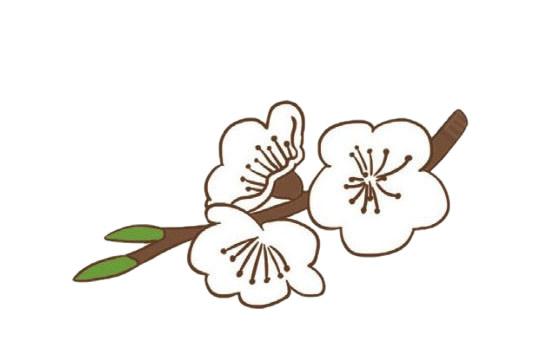 樱花简笔画的画法步骤教程及图片大全 植物-第9张
