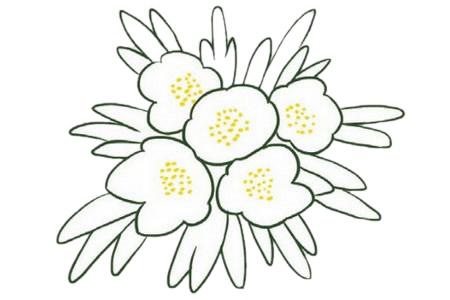 银莲花简笔画的画法,植物简笔画彩色 中级简笔画教程-第4张
