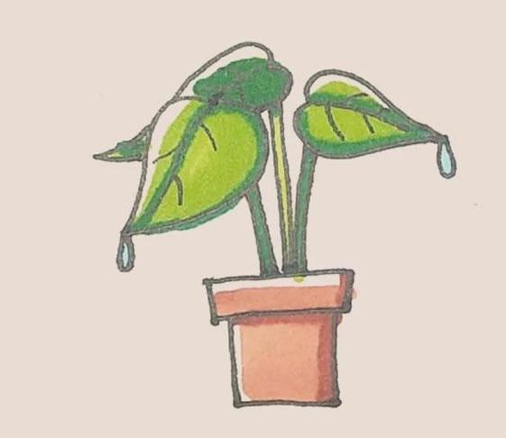 盆栽植物简笔画画法步骤图 初级简笔画教程-第1张
