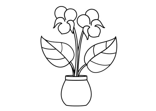 紫罗兰盆栽简笔画彩色画法步骤图片 中级简笔画教程-第6张
