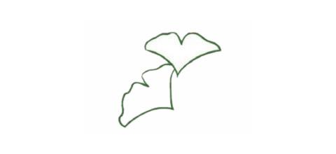 银杏树叶简笔画的画法 初级简笔画教程-第2张