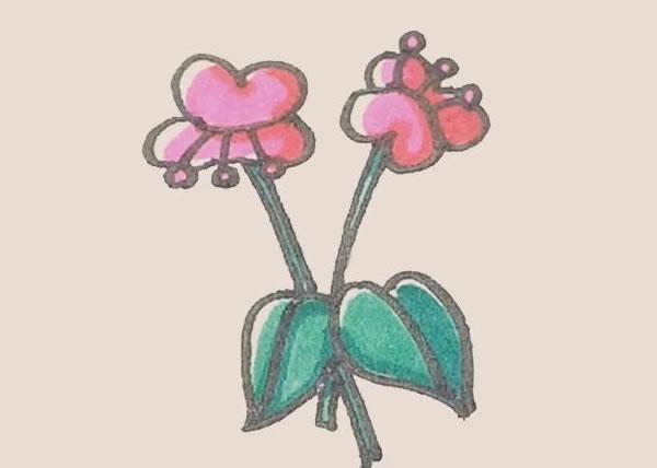 蝴蝶兰花朵简笔画的画法 中级简笔画教程-第1张