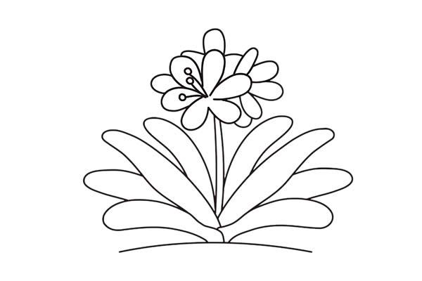 君子兰花彩色画法简笔画 中级简笔画教程-第5张