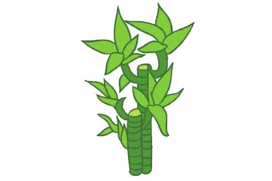 富贵竹简笔画,竹子儿童简笔画 初级简笔画教程-第9张
