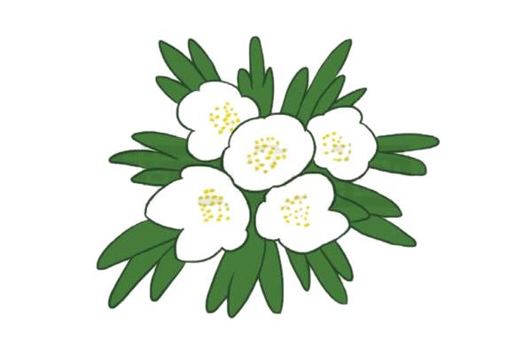 银莲花简笔画的画法,植物简笔画彩色 中级简笔画教程-第5张