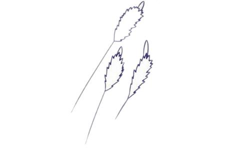儿童简笔画薰衣草彩色画法 中级简笔画教程-第4张