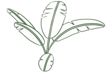彩色芭蕉树简笔画的画法 初级简笔画教程-第4张