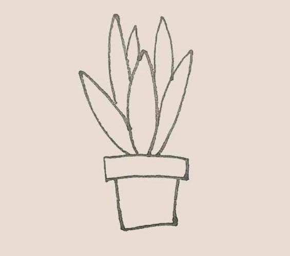 虎皮兰简笔画,盆栽简笔画画法 中级简笔画教程-第6张