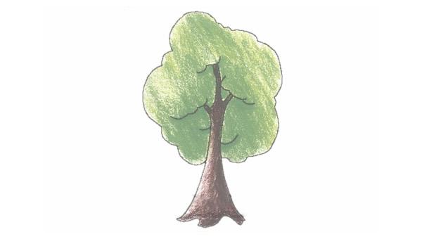 小树简笔画的画法步骤图教程 植物-第1张