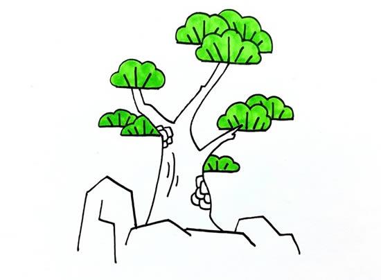 简单易学的松柏树画法步骤 中级简笔画教程-第5张
