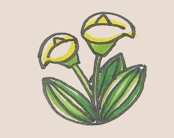 马蹄莲植物简笔画 中级简笔画教程-第1张
