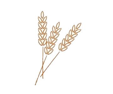 麦穗简笔画,小麦简笔画怎么画 中级简笔画教程-第4张